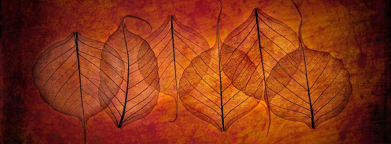 Six Bodhi leaves