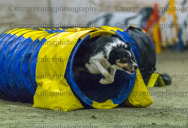 AAC Afternoon Classes - Agility