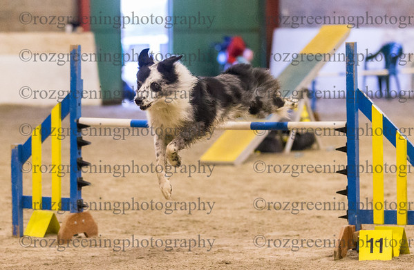 AAC Morning Classes - Agility
