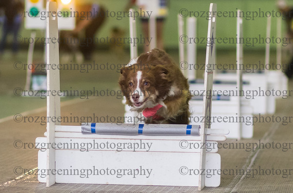 Flyball Eric (31 of 553)