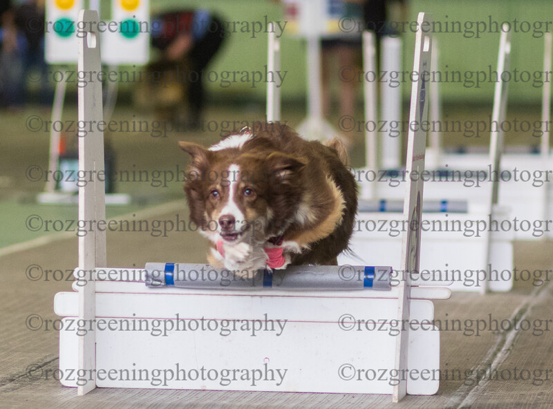 Flyball Eric (12 of 553)