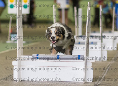 Flyball Eric (26 of 553)