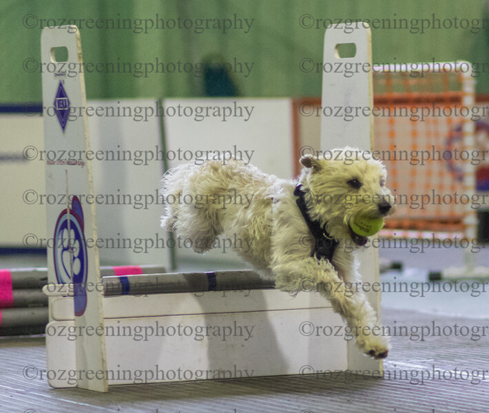 Flyball Eric (188 of 553)