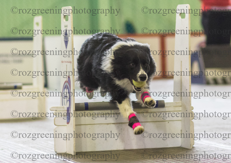 Flyball Eric (103 of 553)