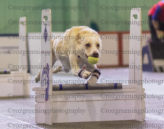 Flyball Eric (79 of 553)