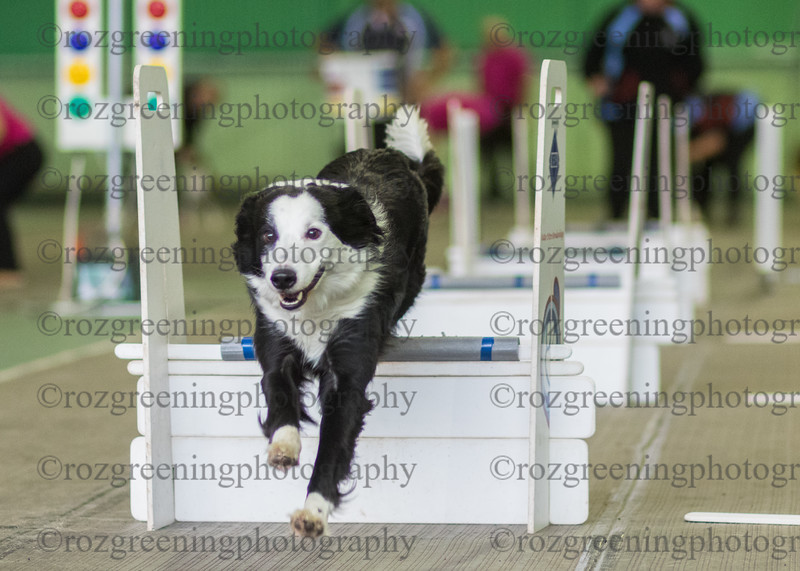 Flyball Eric (151 of 583)