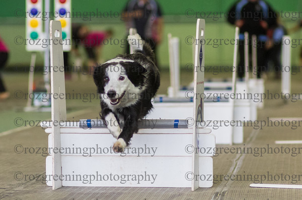 Flyball Eric (128 of 583)