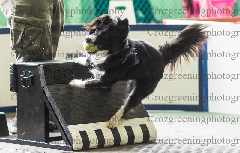 Flyball Eric (561 of 588)
