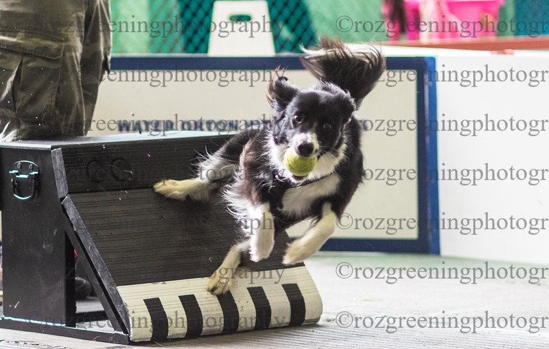 Flyball Eric (562 of 588)