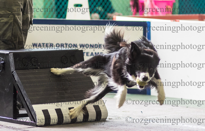Flyball Eric (527 of 588)