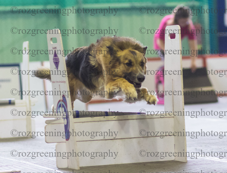 Flyball Eric (177 of 583)
