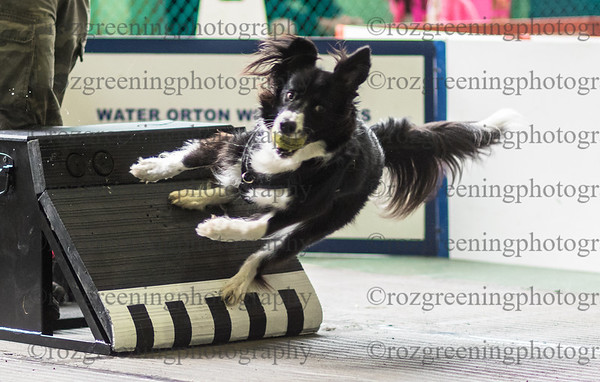 Flyball Eric (532 of 588)
