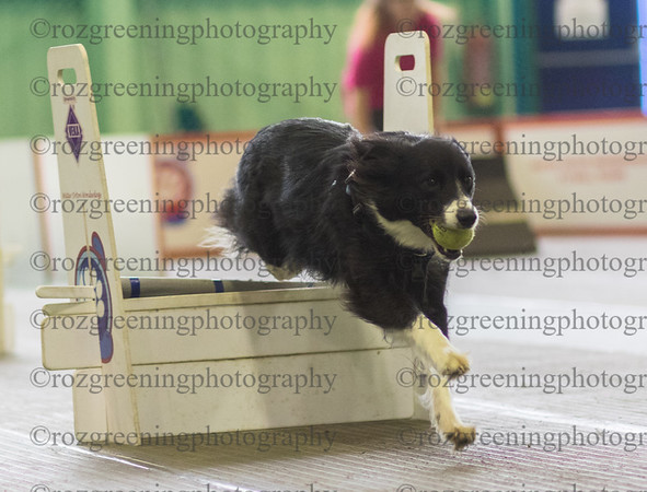 Flyball Eric (191 of 583)