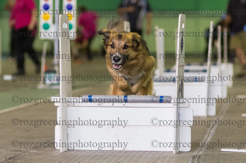 Flyball Eric (124 of 583)