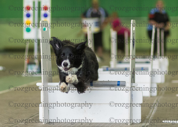 Flyball Eric (156 of 583)