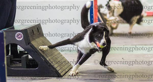 Flyball Eric (429 of 583)