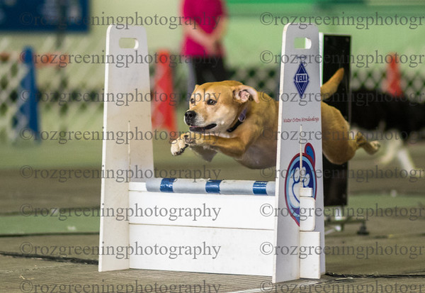 Flyball Eric (66 of 573)