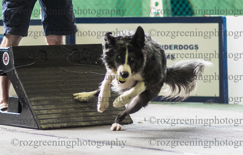 Flyball Eric (28 of 573)