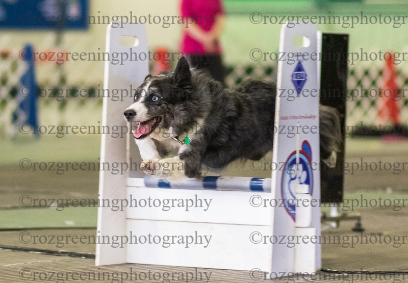 Flyball Eric (80 of 573)