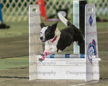 Flyball Eric (391 of 588)
