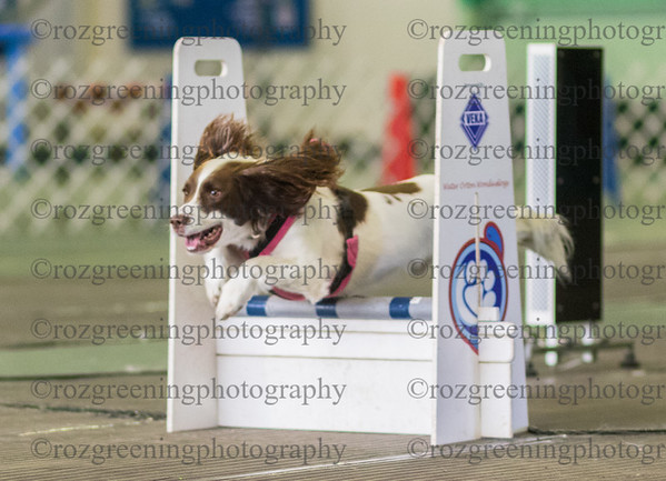 Flyball Eric (554 of 573)
