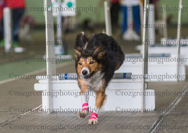 Flyball Eric (504 of 573)
