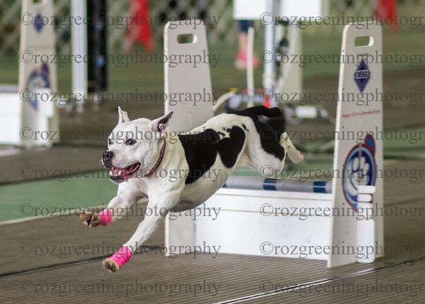 Flyball Eric (14 of 588)