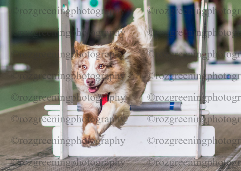 Flyball Eric (491 of 573)