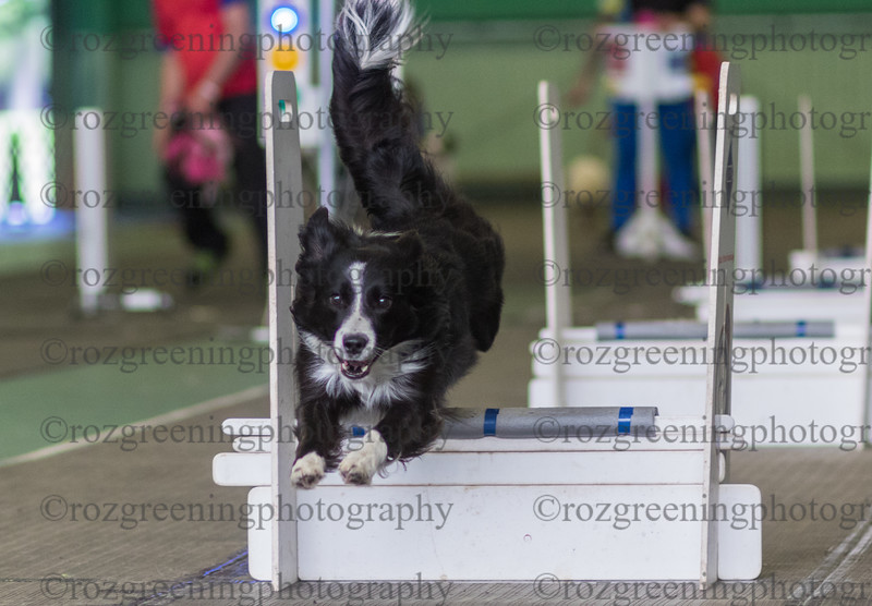 Flyball Eric (512 of 573)