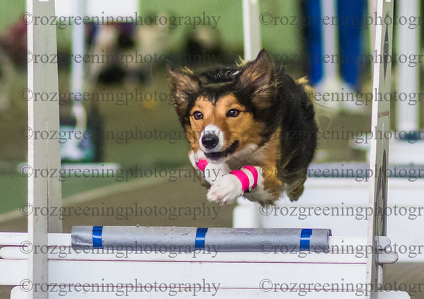 Flyball Eric (439 of 573)