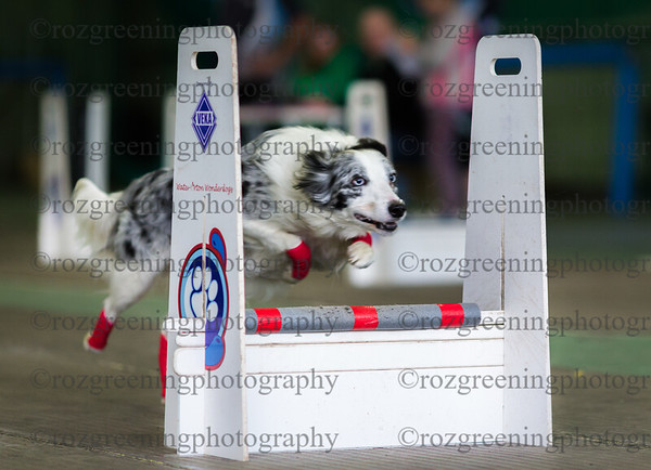 WOW Flyball Team  Indoor Show Sports Connexion  July 2nd 2016