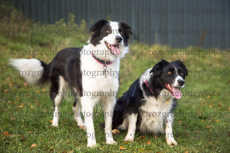Just4Dogs RSG-216-Edit
