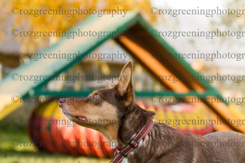 Just4Dogs RSG-1535