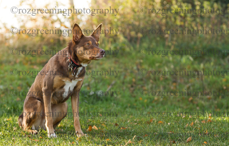 Just4Dogs RSG-1615-Edit