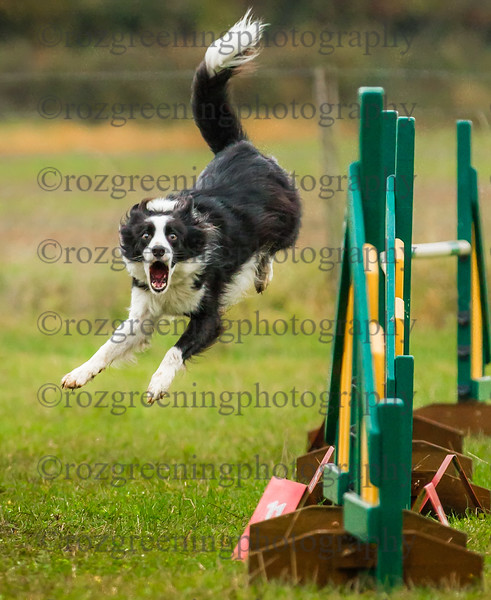 JUST4DOGS Fun Shows