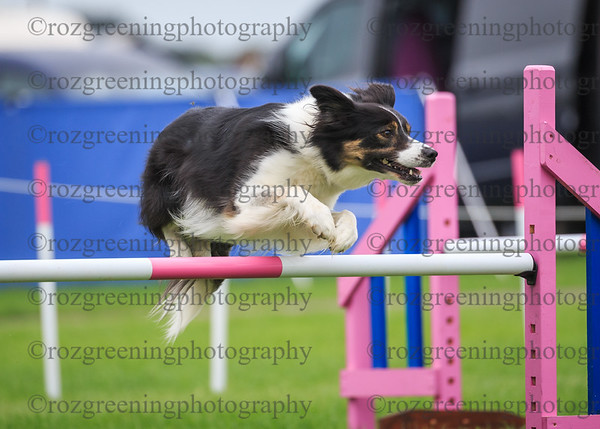 Blenheim Saturday Large Combined 6-7 Agility