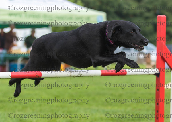 Bromsgrove DTC Saturday Ring 1 Large Agility 1-3 Combined Royal Canin Agility Challenge