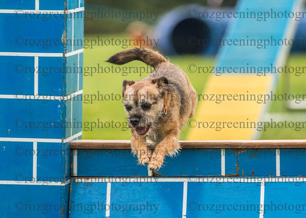 Bromsgrove Saturday Ring 1 Crufts Small Agility Combined 6-7
