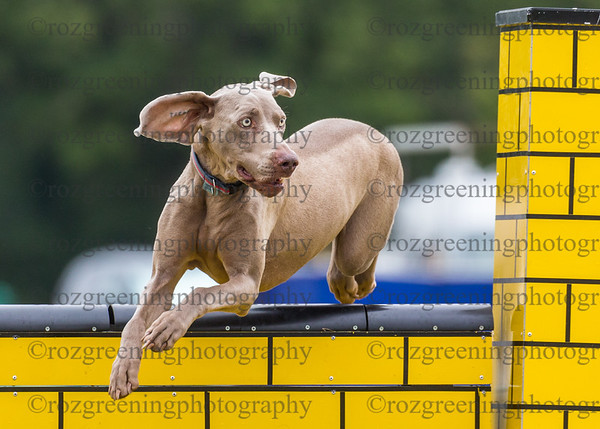 CADAC Sunday Standard Large Agility Combined 1-3