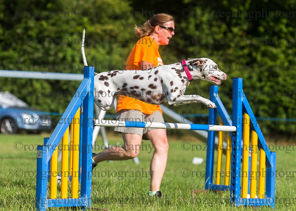Ring 2 Large Grade 1-7 Agility