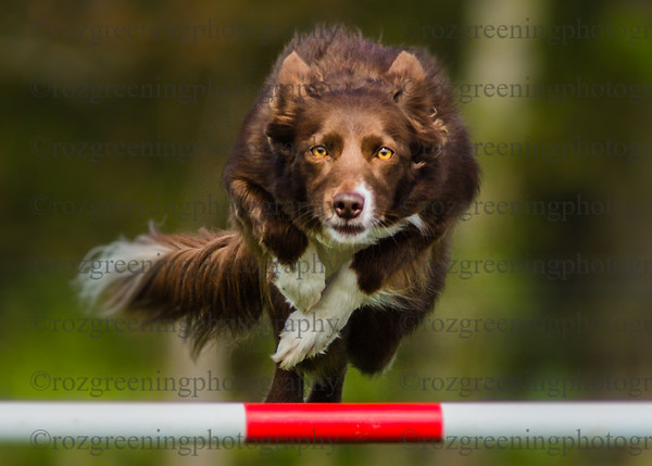 Golden Valley DTC Spring Agility Show