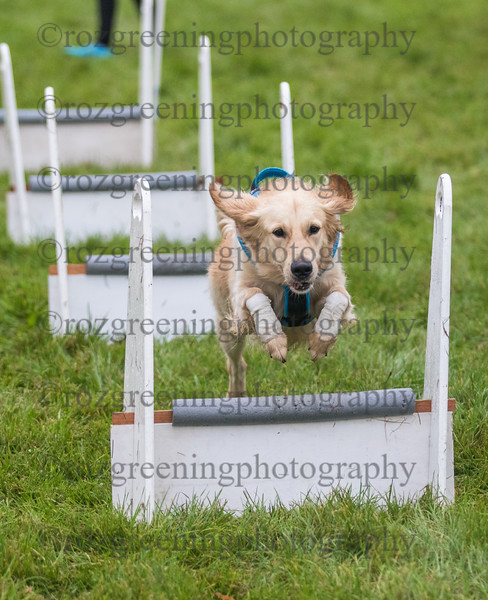 PP flyball eric (200 of 500)