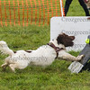 PP flyball eric (401 of 500)