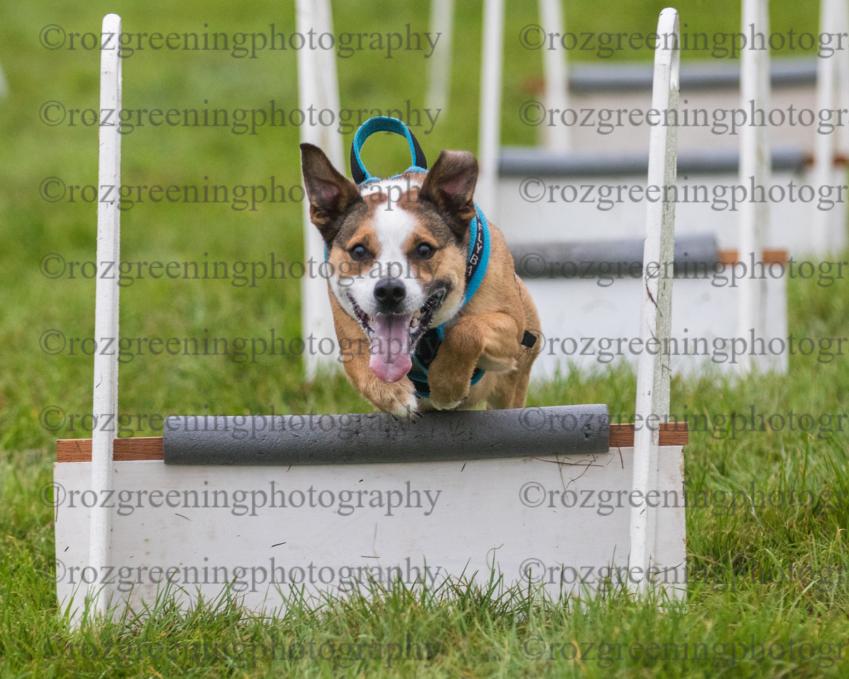 PP flyball eric (283 of 500)