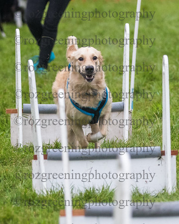 PP flyball eric (192 of 500)