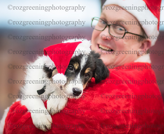 Taming Canines  DTC  Xmas Show
