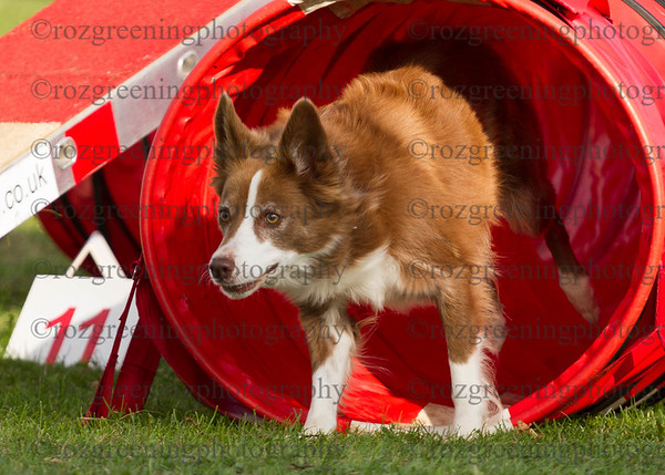 Agility for England Eric 1-70