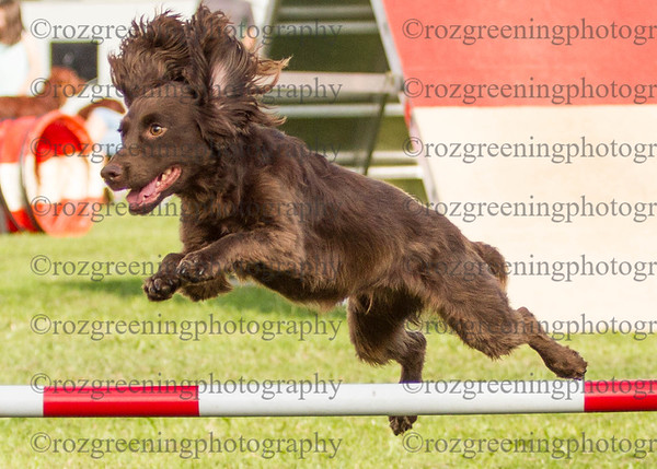 Agility for England Eric 1-46