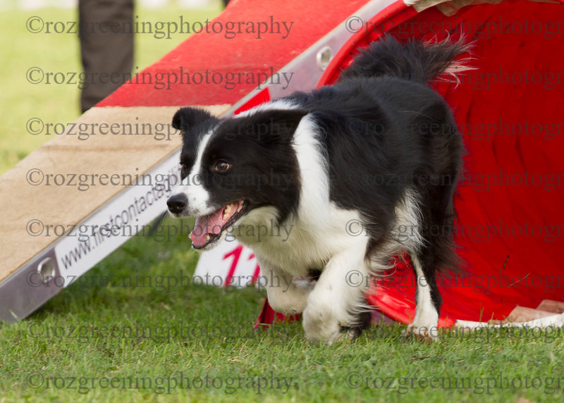Agility for England Eric 1-142