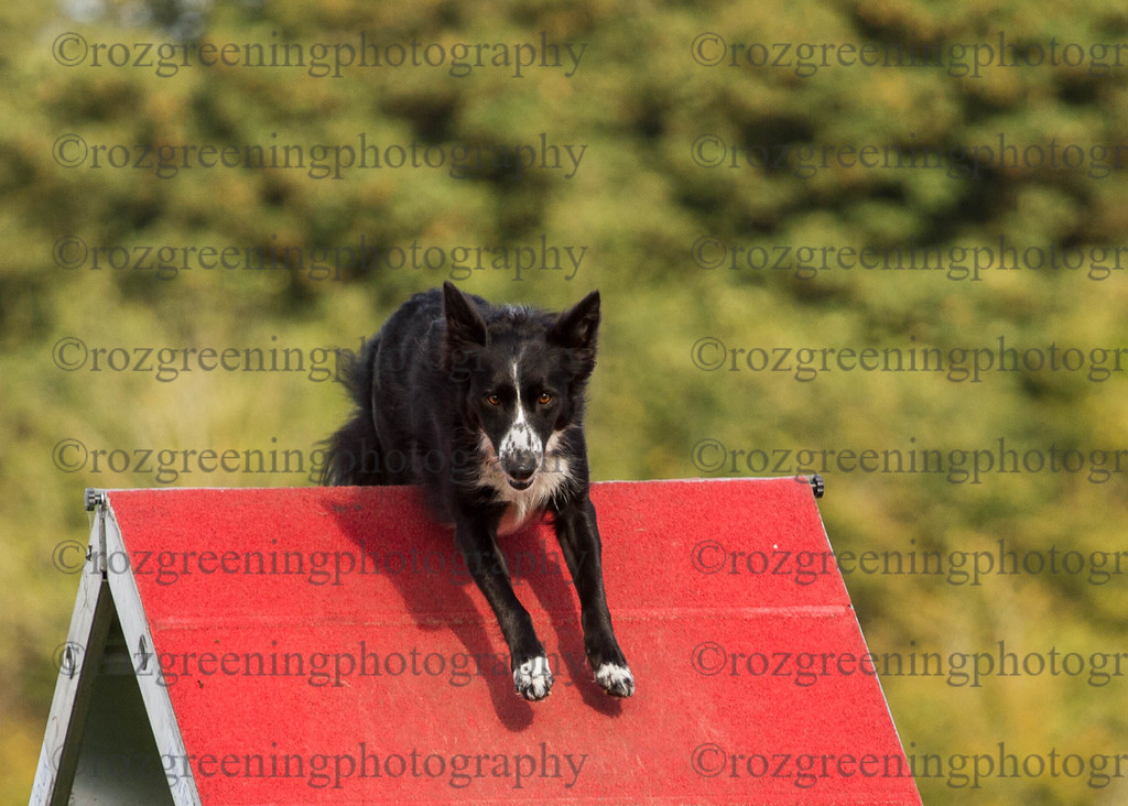 Agility for England Eric 1-97